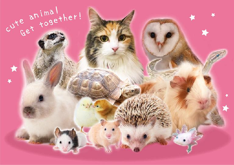 動物たちの集合写真