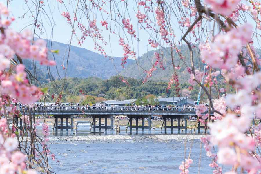 桜越しに見える嵐山と渡月橋