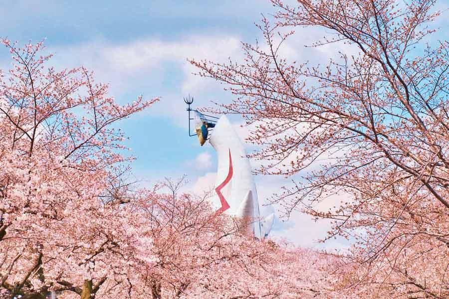 万博記念公園の桜と太陽の塔