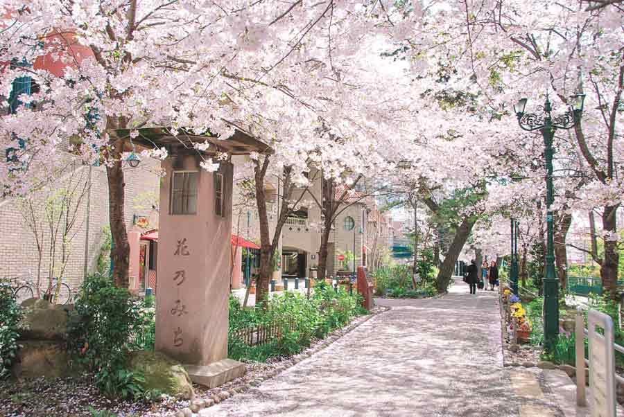 満開の桜が咲く花のみち