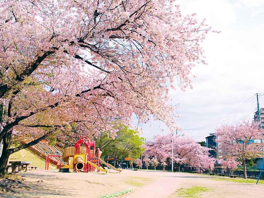 服部緑地の遊具と桜