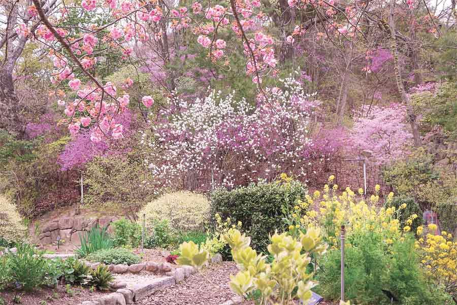 北山緑化植物園の桜と春の花