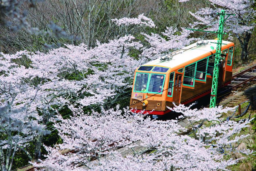 桜の間を走る妙見の森ケーブル