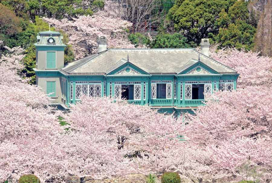 王子動物園の洋館を囲む満開の桜