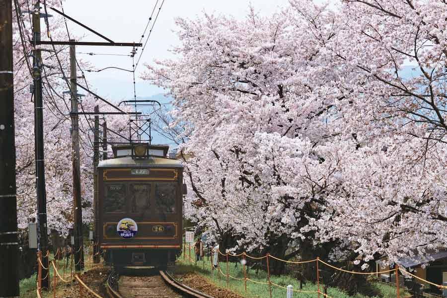 桜の間を走る嵐電