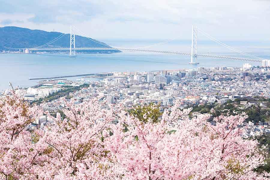 山上から見える明石大橋と桜