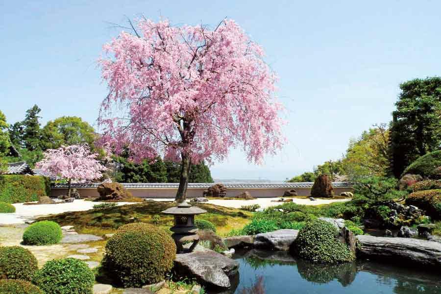 正法寺の庭園と桜