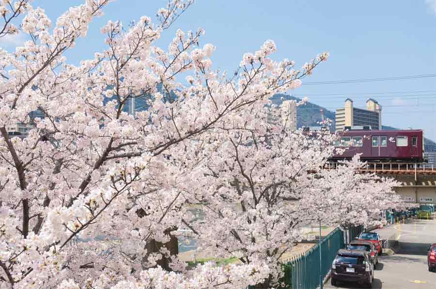 桜越しに見える阪急電車