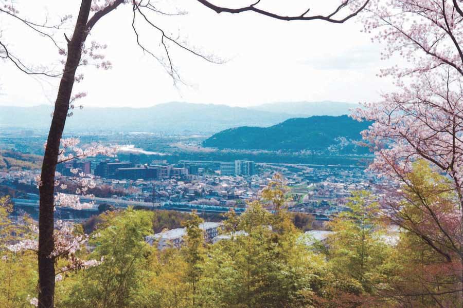 若山神社の桜と三川合流