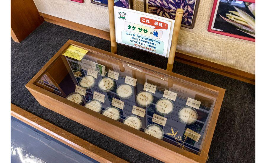 竹の資料館に展示されている竹の種