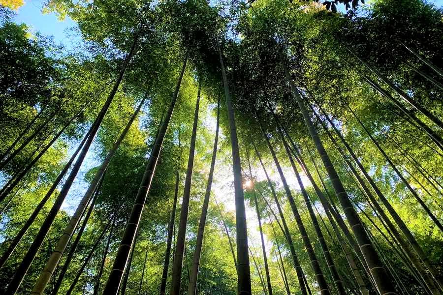 竹の合間から漏れる美しい木漏れ日