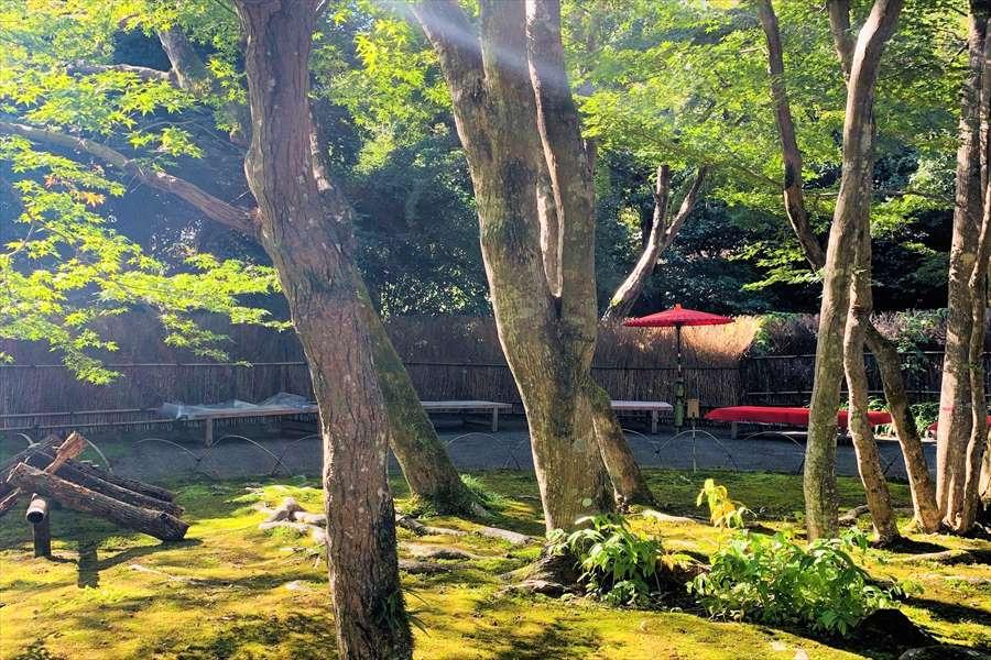 宝厳院の茶席から見える苔ともみじの共演