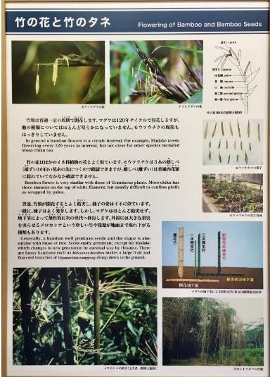 竹の資料館の展示パネル