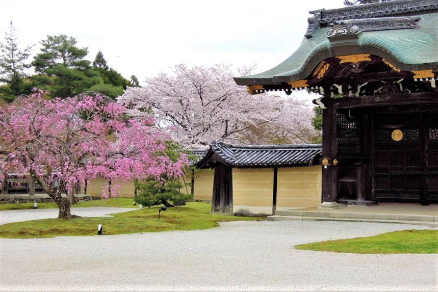 桜の季節の大覚寺 直諮門