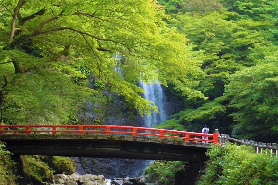 青もみじに包まれる大滝周辺