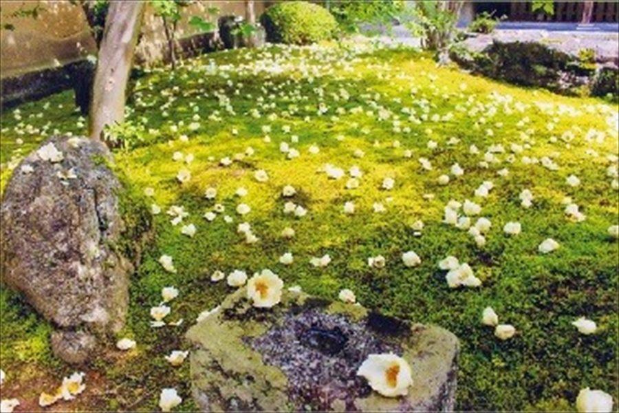 苔の上に白い沙羅双樹の花が散る