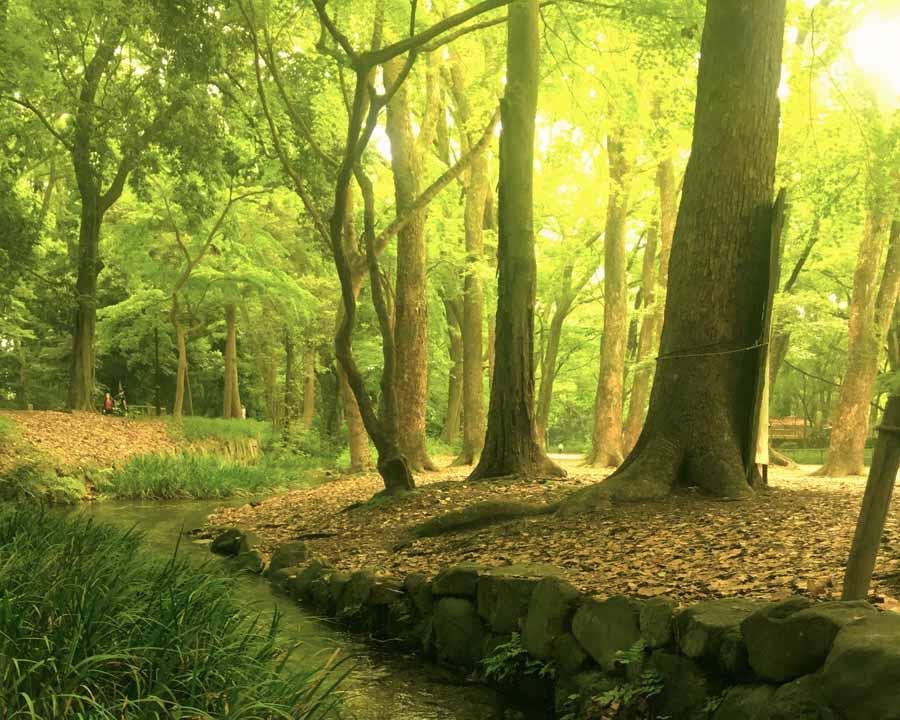 やわらかな日差しが注ぐ糺の森