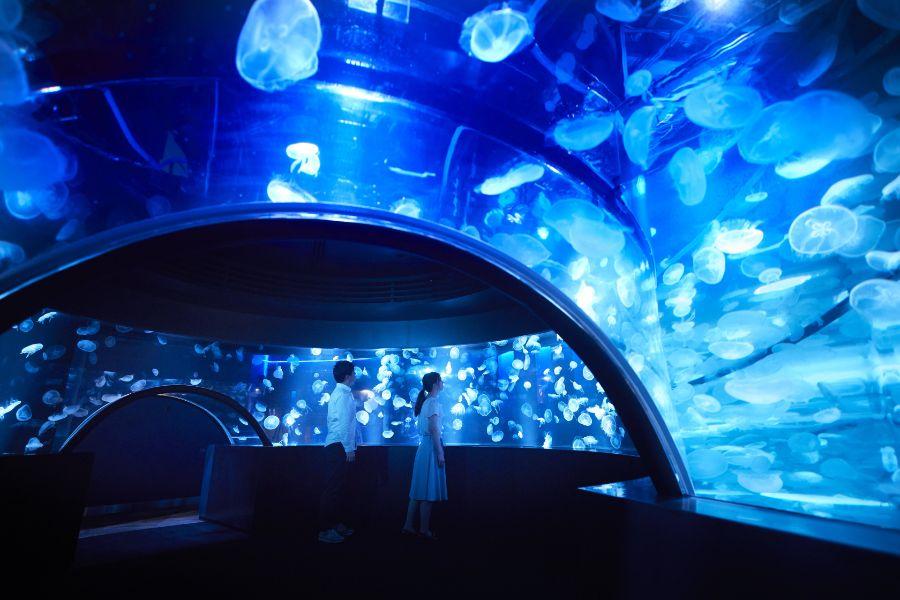 アートをくぐると360度クラゲに包まれる幻想的な光景が