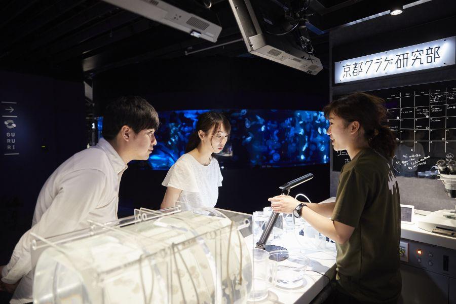 飼育員の作業を観察できる「京都クラゲ研究所」