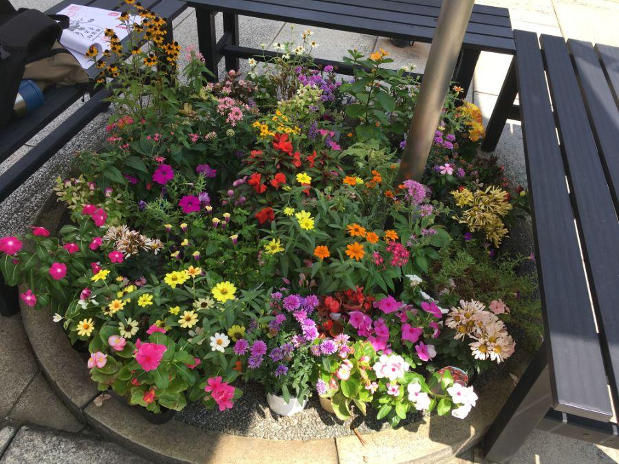 テラス席の花