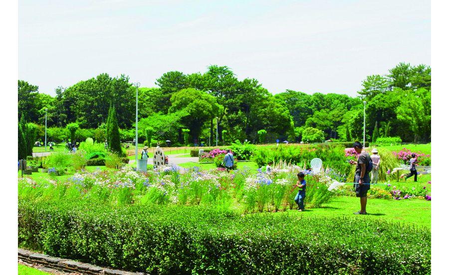 服部緑地園内は広くさまざまな草花が広がる