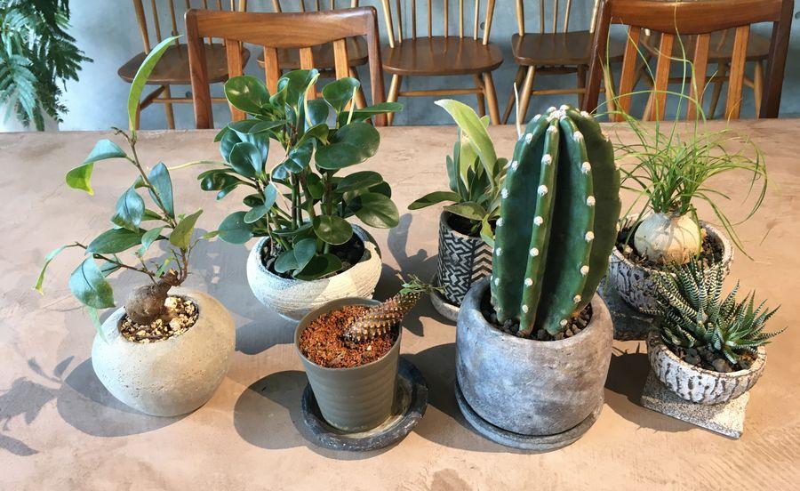 什器や植物もシチニア食堂がプロデュースしたのだとか