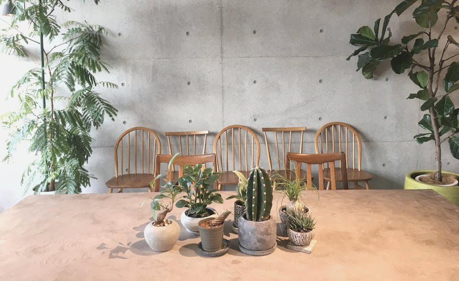 店内のあちこちに飾られた観葉植物