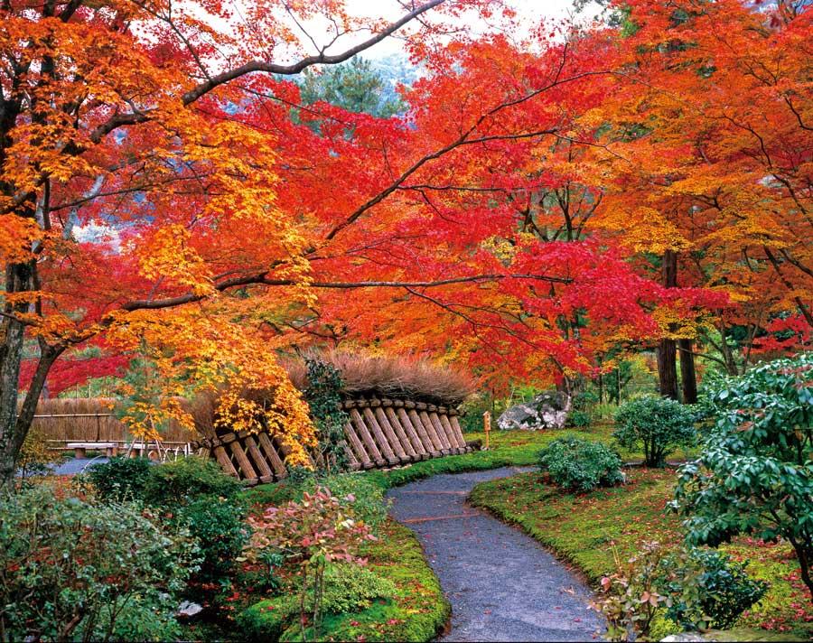 紅葉に彩られた参道