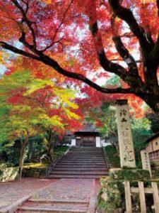 百地で彩られた安楽寺の山門