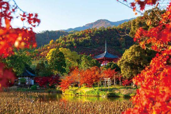 紅葉と大沢池