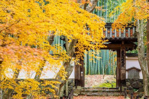 竹林の緑と黄色に染まる木々