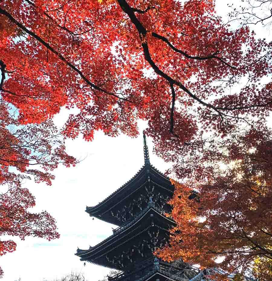秋の真如堂