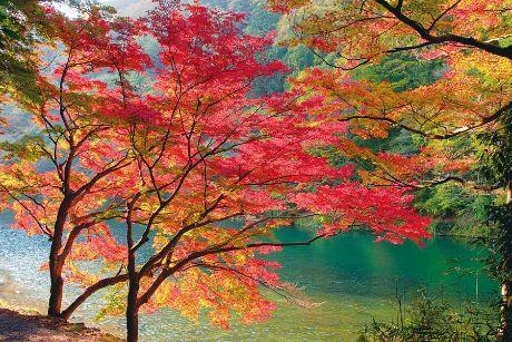 紅葉越しに写る川