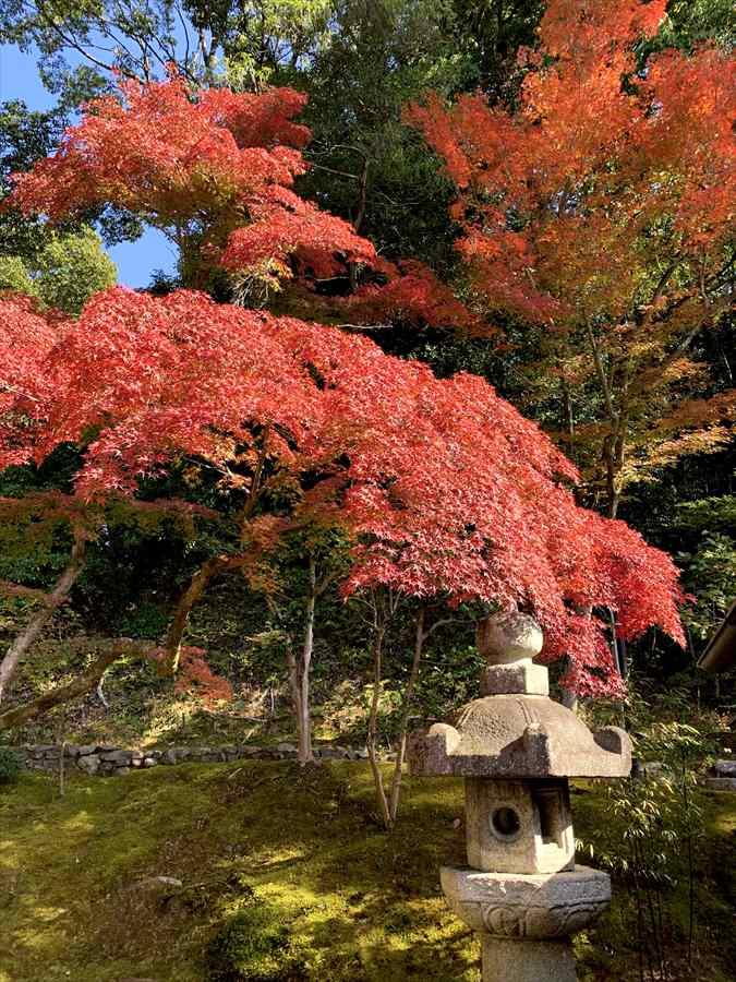 金戒光明寺の紅葉と灯篭