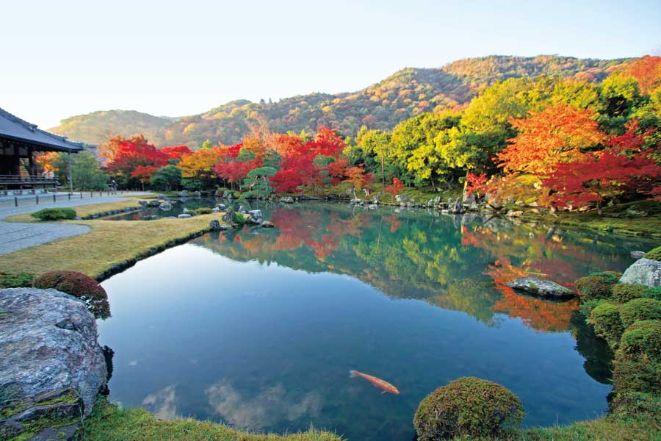 紅葉した天龍寺の美しい庭