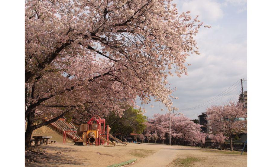 桜に囲まれるいなり山児童遊戯場
