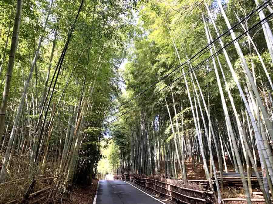 竹林が続く柳谷観音までの参道