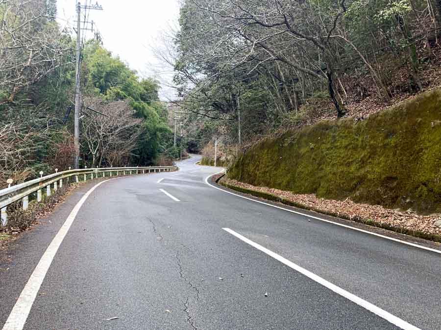 柳谷観音へのルート途中にある竹林