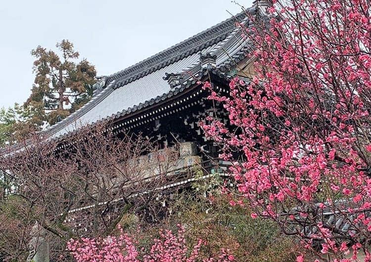 鮮やかな紅色の梅と社殿