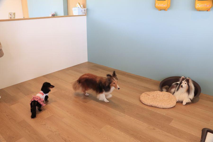 幼稚園でくつろく犬たち