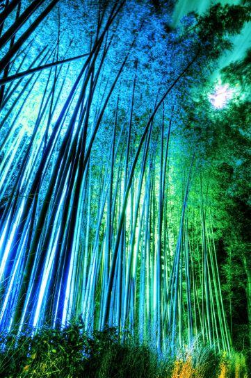 青くライトアップされた竹林の小径