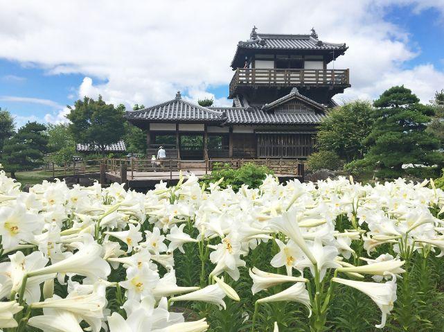 池田城跡公園のユリとやぐら風展望舎