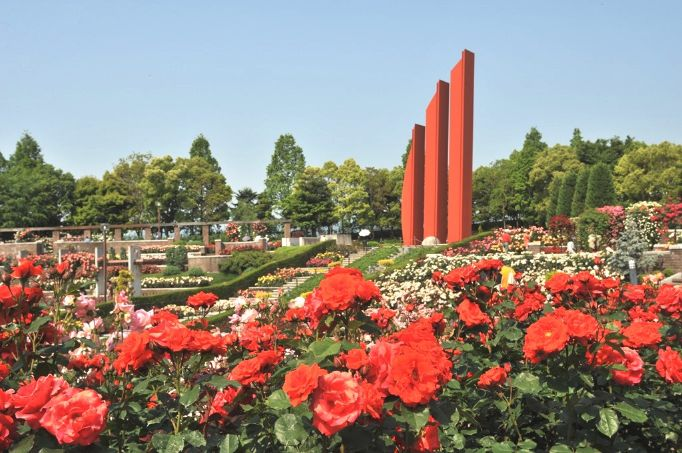 一面バラが咲いた荒牧バラ公園