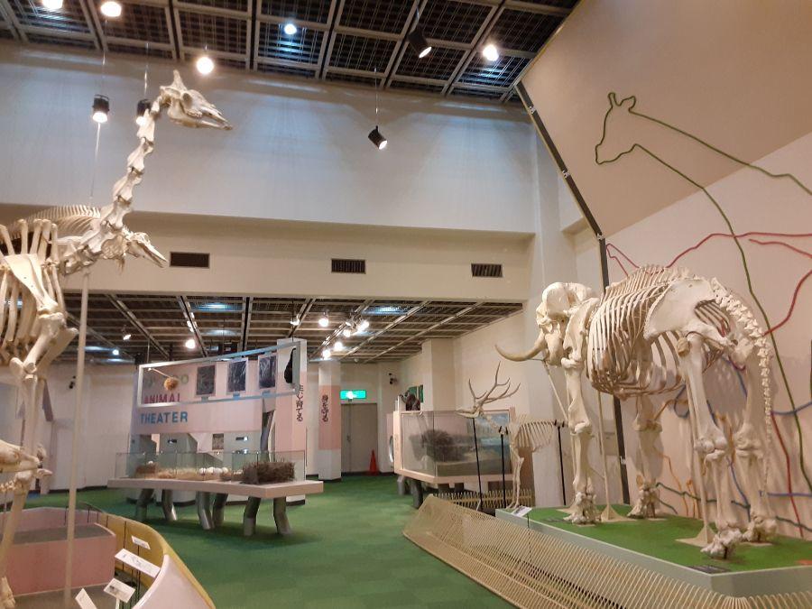 動物科学資料館の展示