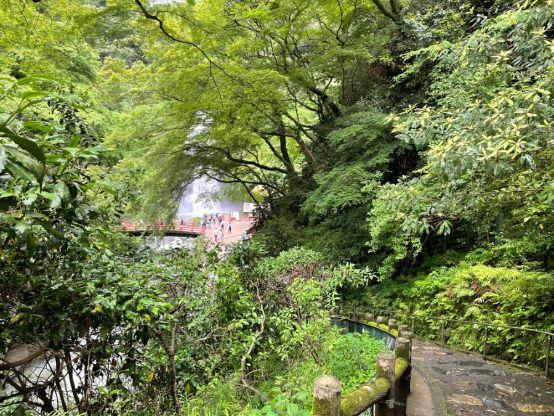 木々の間に見える箕面大滝