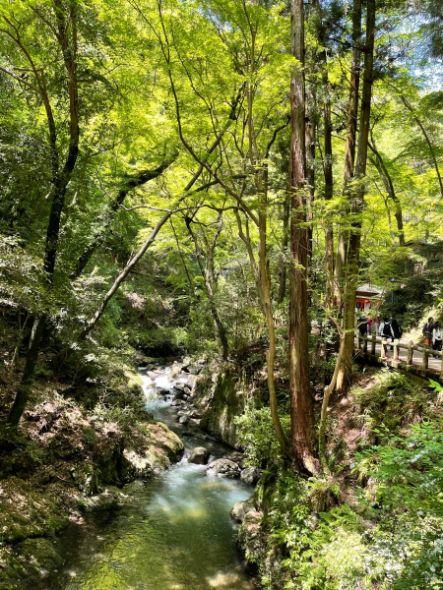 新緑の箕面の滝道