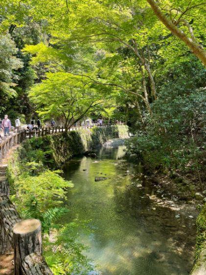 清々しい箕面の滝道