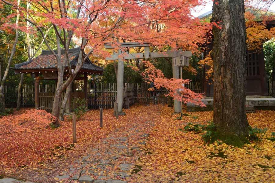 蓮華寺の紅葉の景色