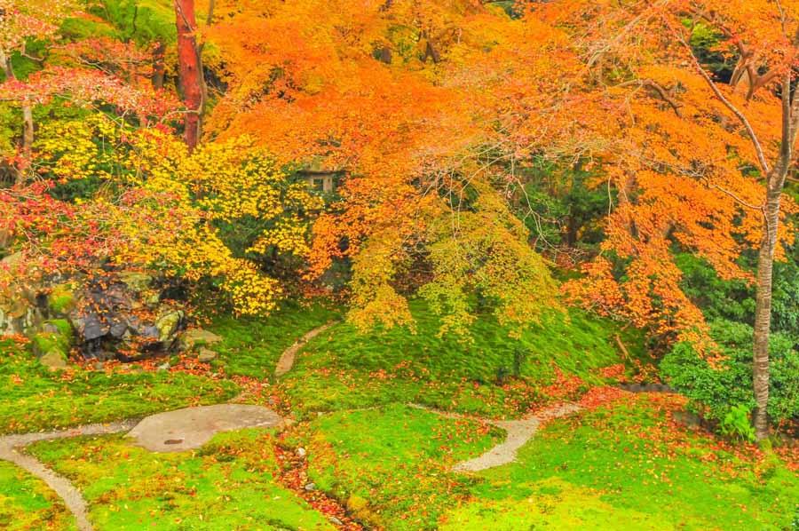 瑠璃光院の1階から見る紅葉