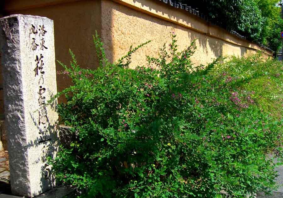 萩の名所として知られる迎称寺